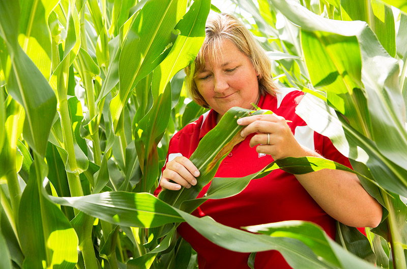 Extension educator in field looking at corn